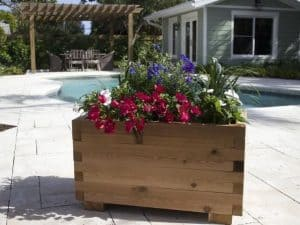 Flowering Planter Box Plant Ideas