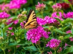 Flowering Plants for Garden Planter Box